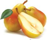 Комплексная защита сада и огорода (схемы применения препаратов) (Болезни плодовых, Болезни овощных культур, Болезни)