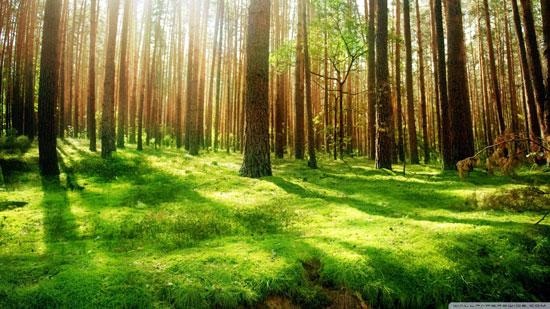 Органическое земледелие Forest