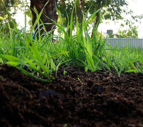Органическое земледелие Gumus