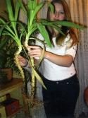 Как в аквариуме сделать углекислый газ в домашних условиях